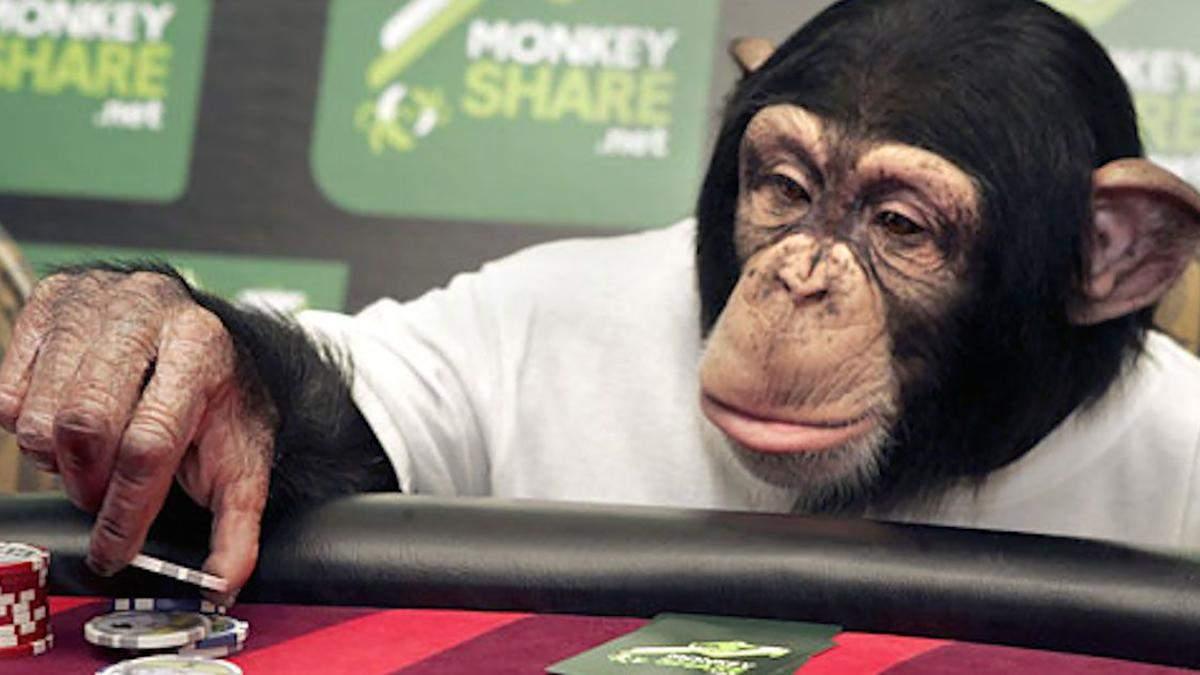 Професіонали радять, як не потрібно грати у покер