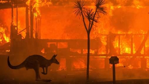 Покерна спільнота пожертвувала 5 мільйонів доларів на ліквідацію пожеж в Австралії